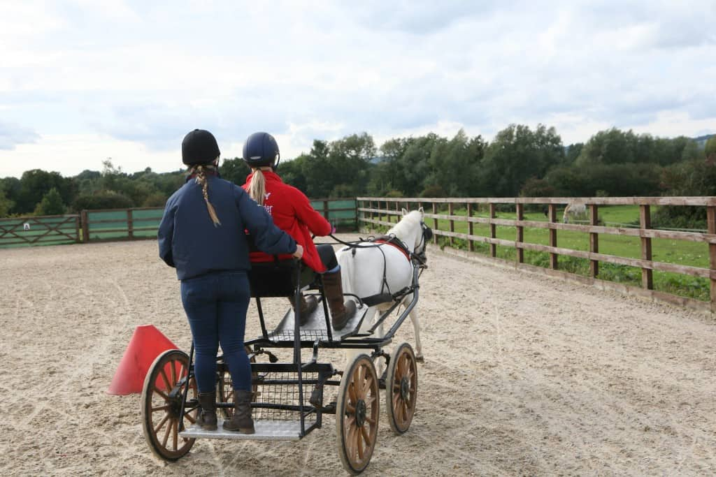 pony driving around obstacles