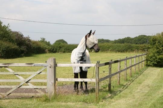field-kept pony
