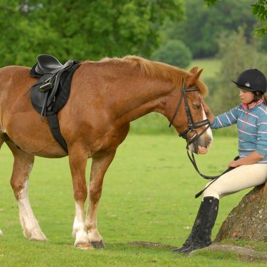 real life drama pony magazine pony magazine