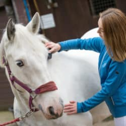 spoil your pony