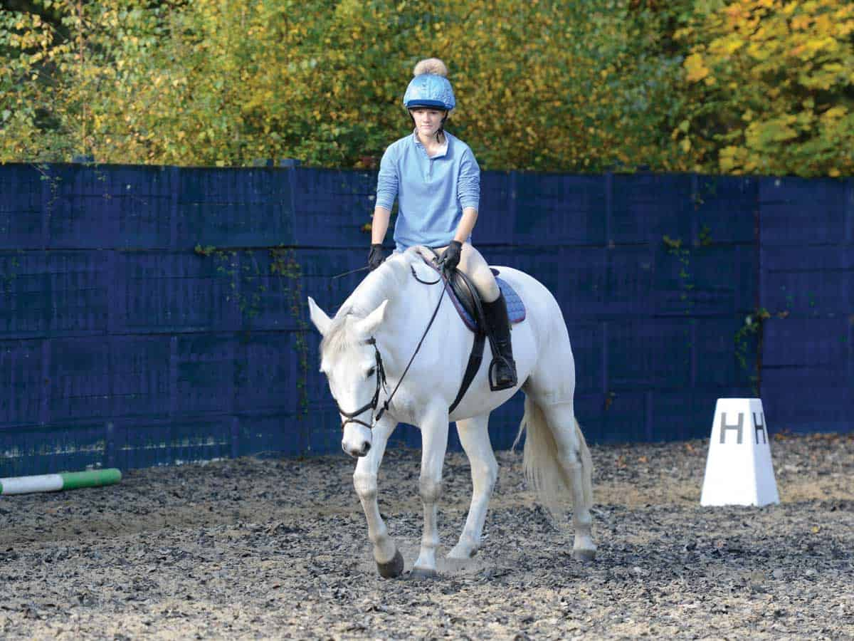 how to ride a free walk on a long rein