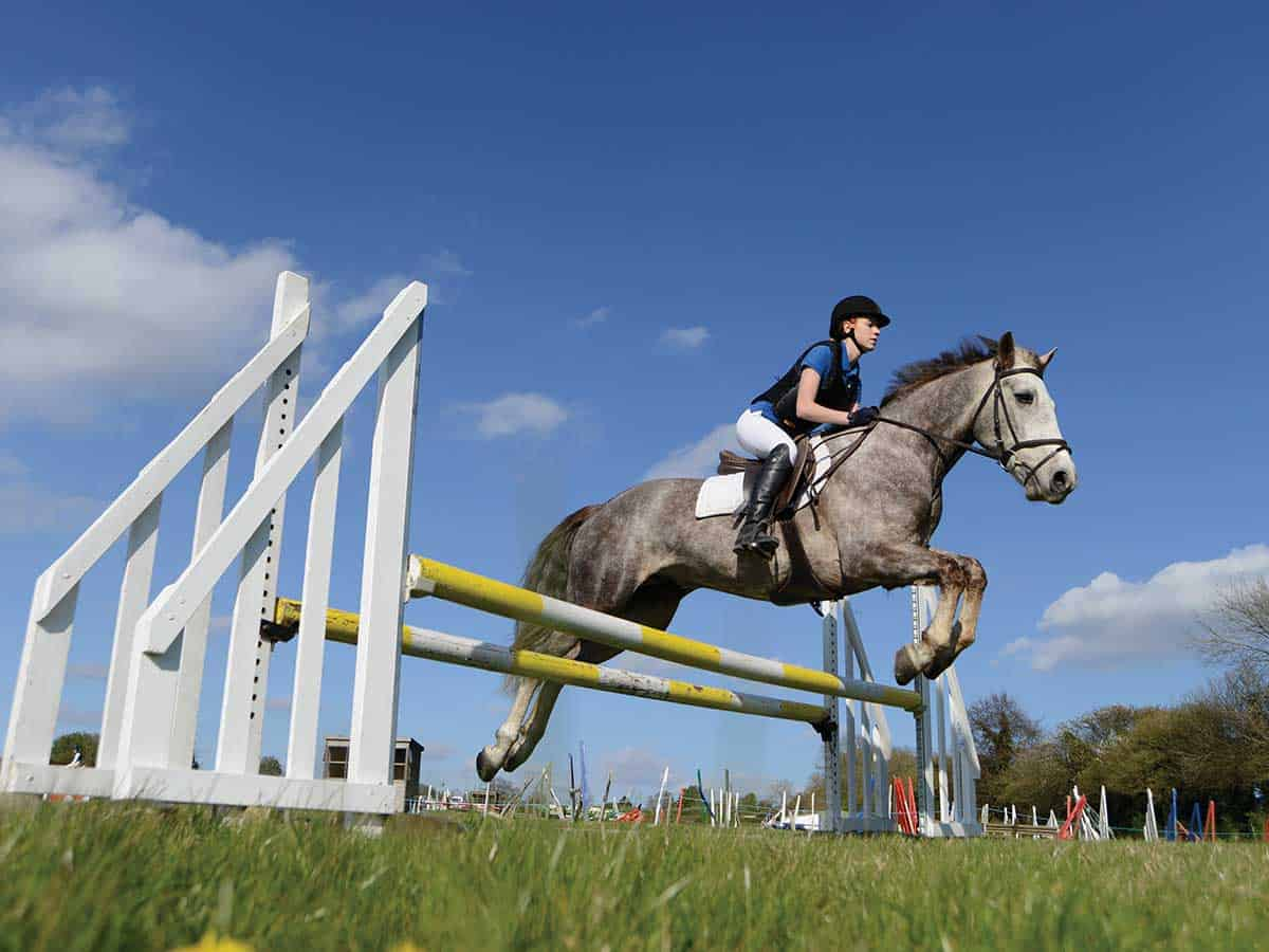Showjumping spread fence