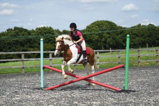 Pony jumping cross-pole