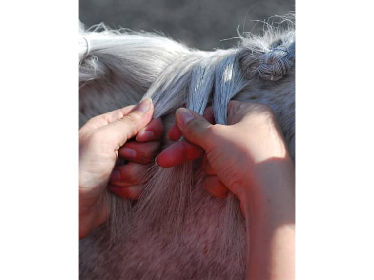 Plaiting a mane, divide hair into three