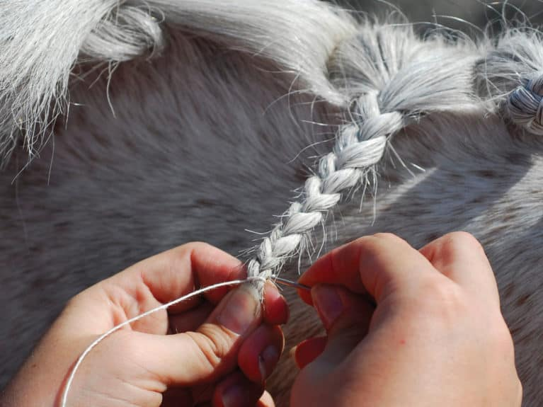 Plaiting pony mane with needle and thread