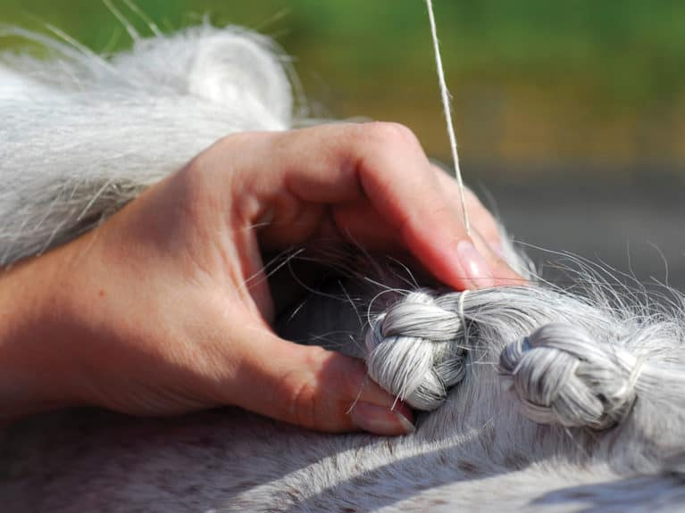 plaiting pony mane step 4, rolling plait