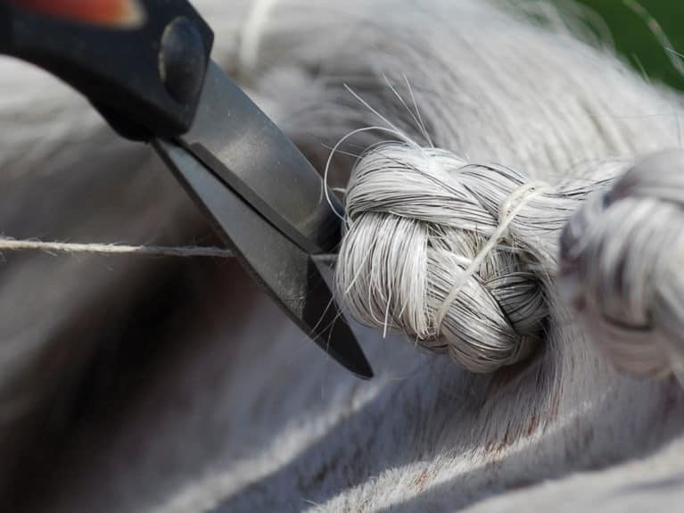 plaiting pony mane, finishing off the plait