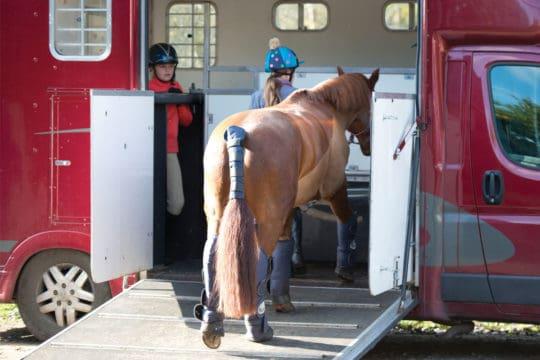 Horse walking up ramp