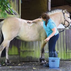 Pony being bathed