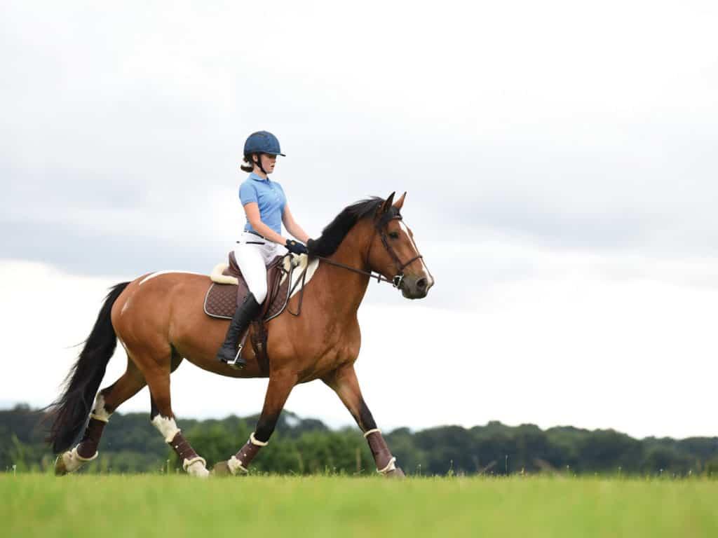 Pony trotting