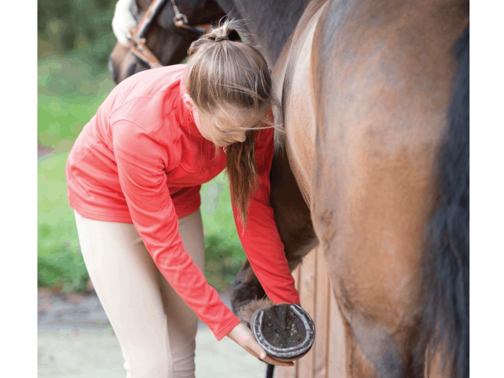 Checking a pony's feet