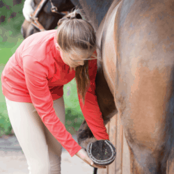 Checking a pony's feet