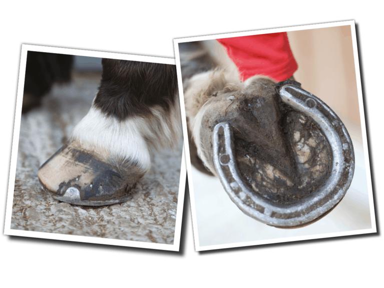 Pony's hooves