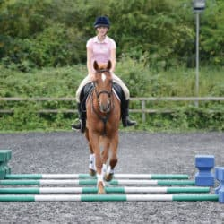 Trotting poles riding exercise