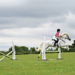 Pony jumping a grid