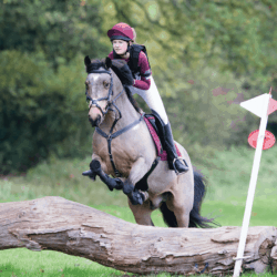 pony competing at a hunter trial