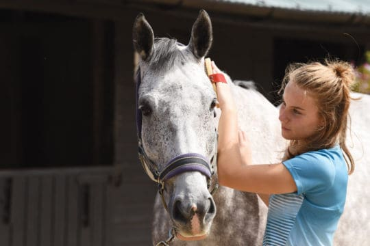 Gain your pony's trust through grooming