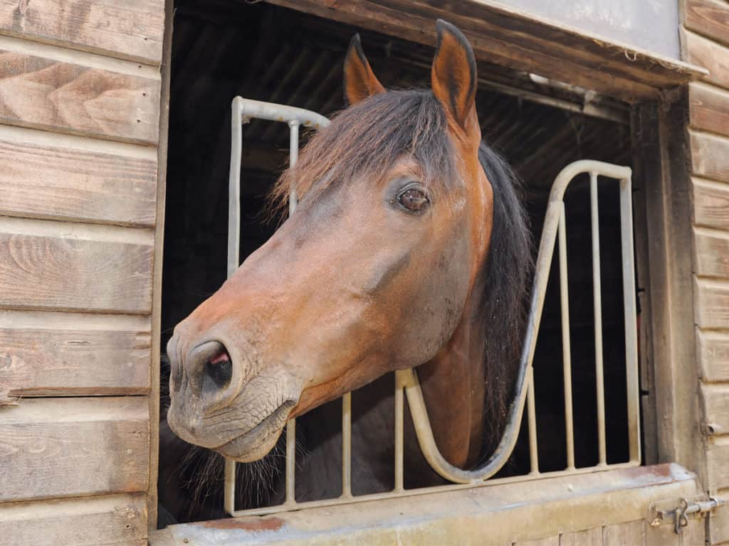 stabling a pony during winter