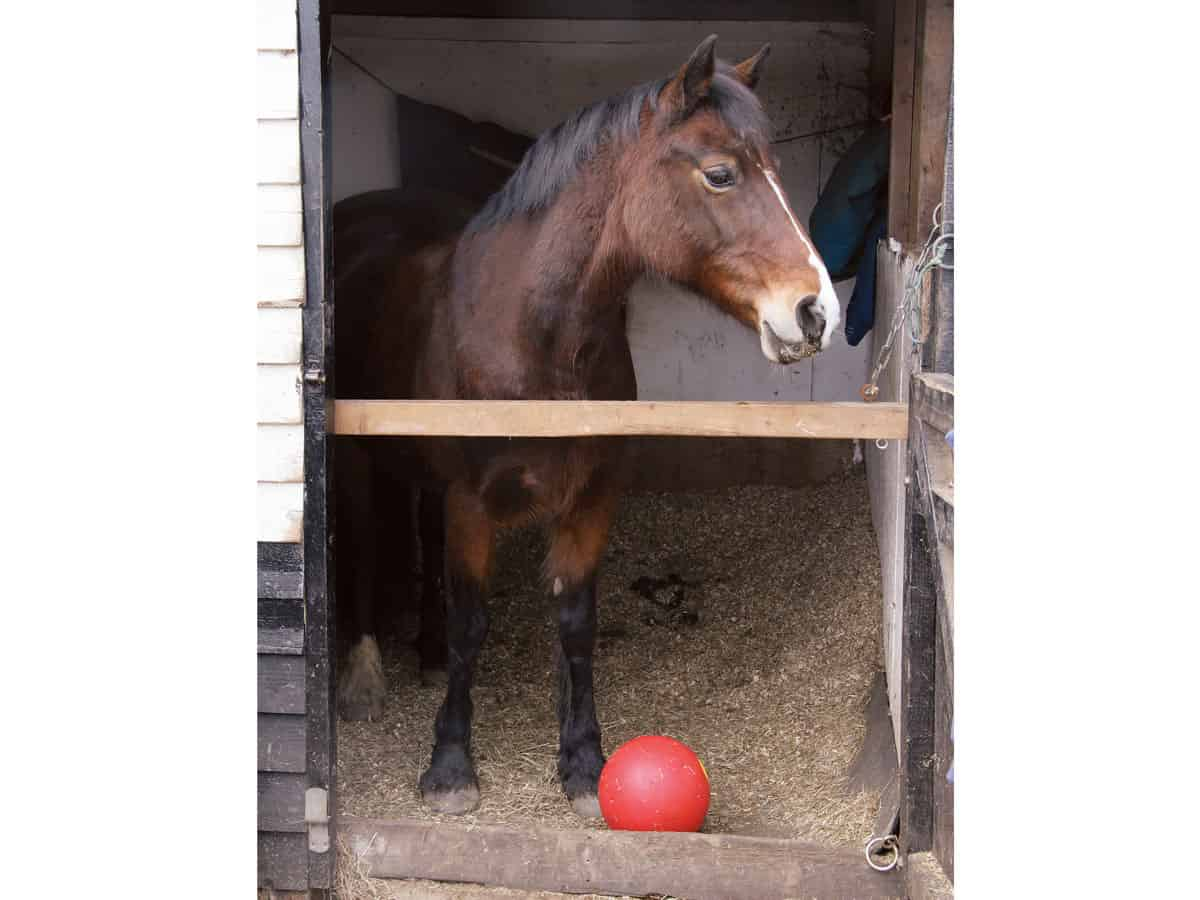 Pony with a stable toy