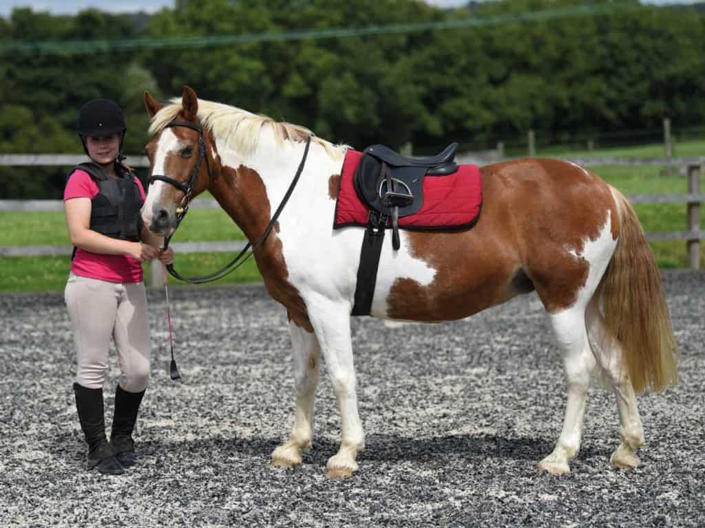Pony tacked up ready for a ride