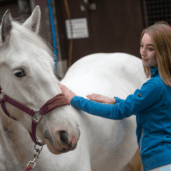 Assessing pony's body condition