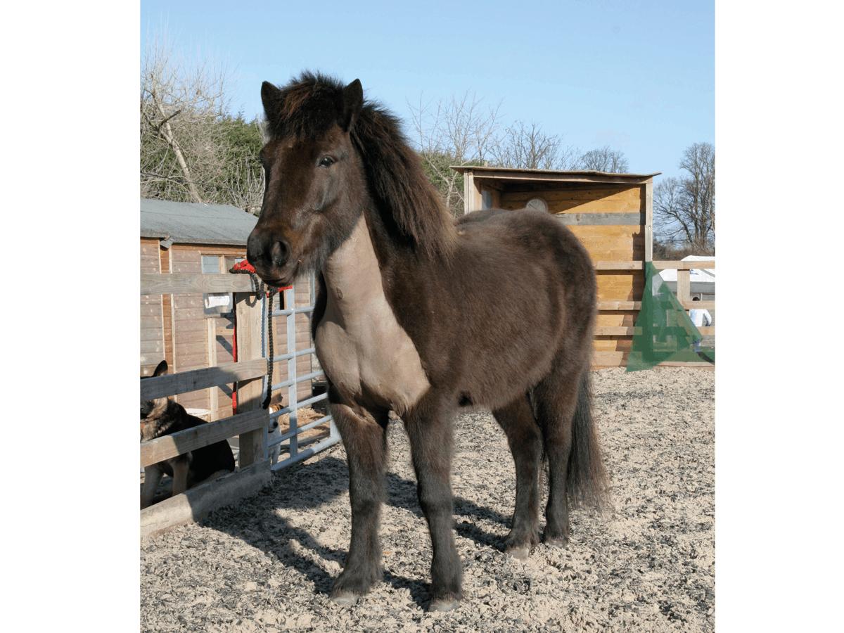 Pony with a bib clip