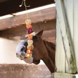 Horse using a hanging vegetable stable toy