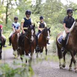 Ponies hacking in a group