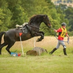 Competing at trec with your pony
