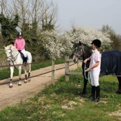 pony behaviour