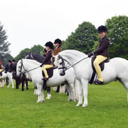 Showing your pony, ponies lined up for the judge