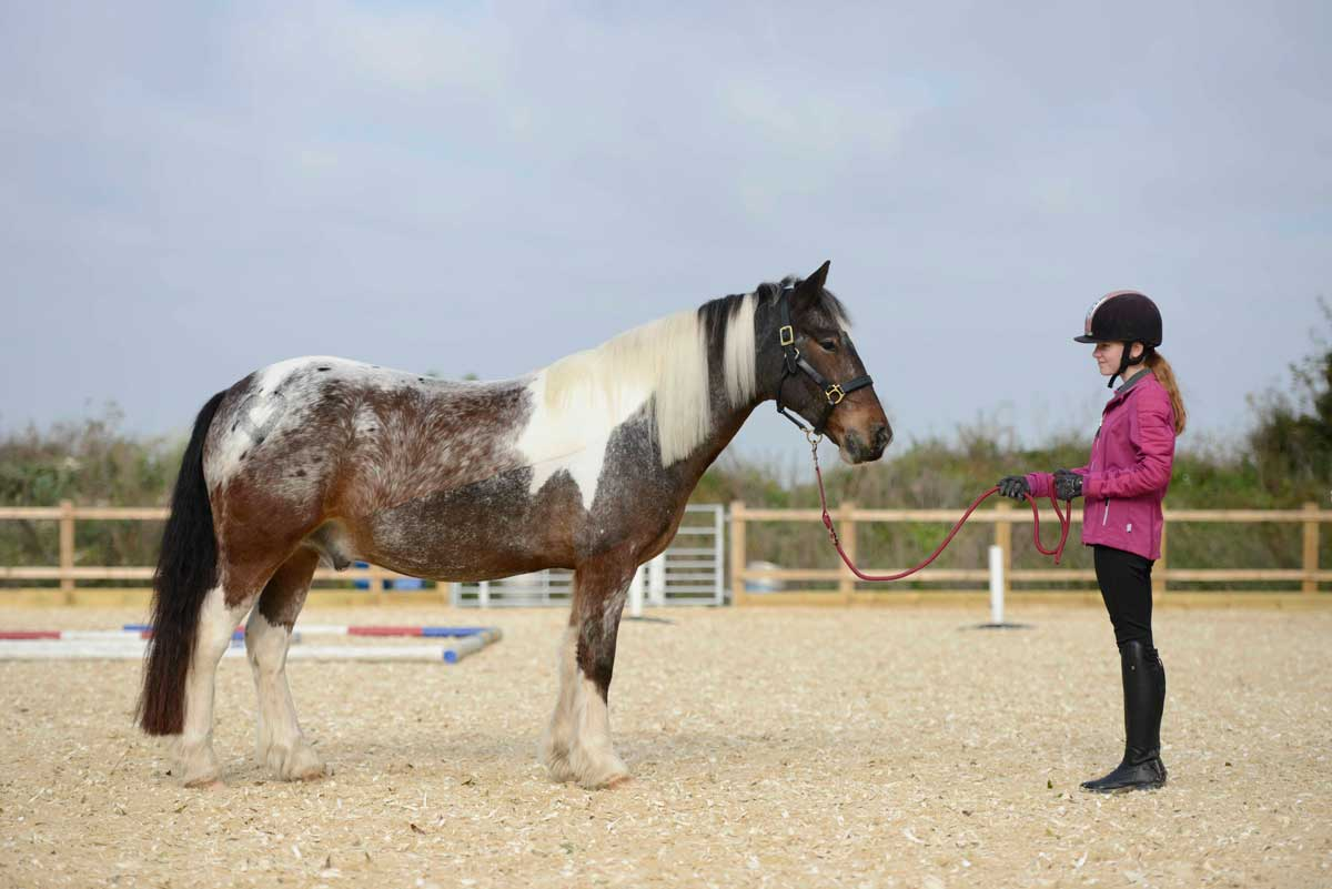 Teaching your pony to stand
