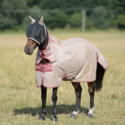 Pony protected by flies by wearing a fly masks and fly rug