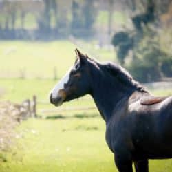 Understanding your pony's body language