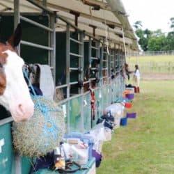 Pony at Pony Club camp