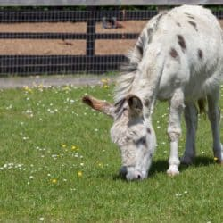 Dotty the donkey at Redwings Sanctuary