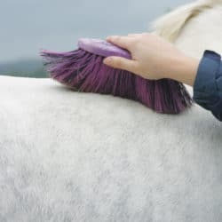 grooming your pony