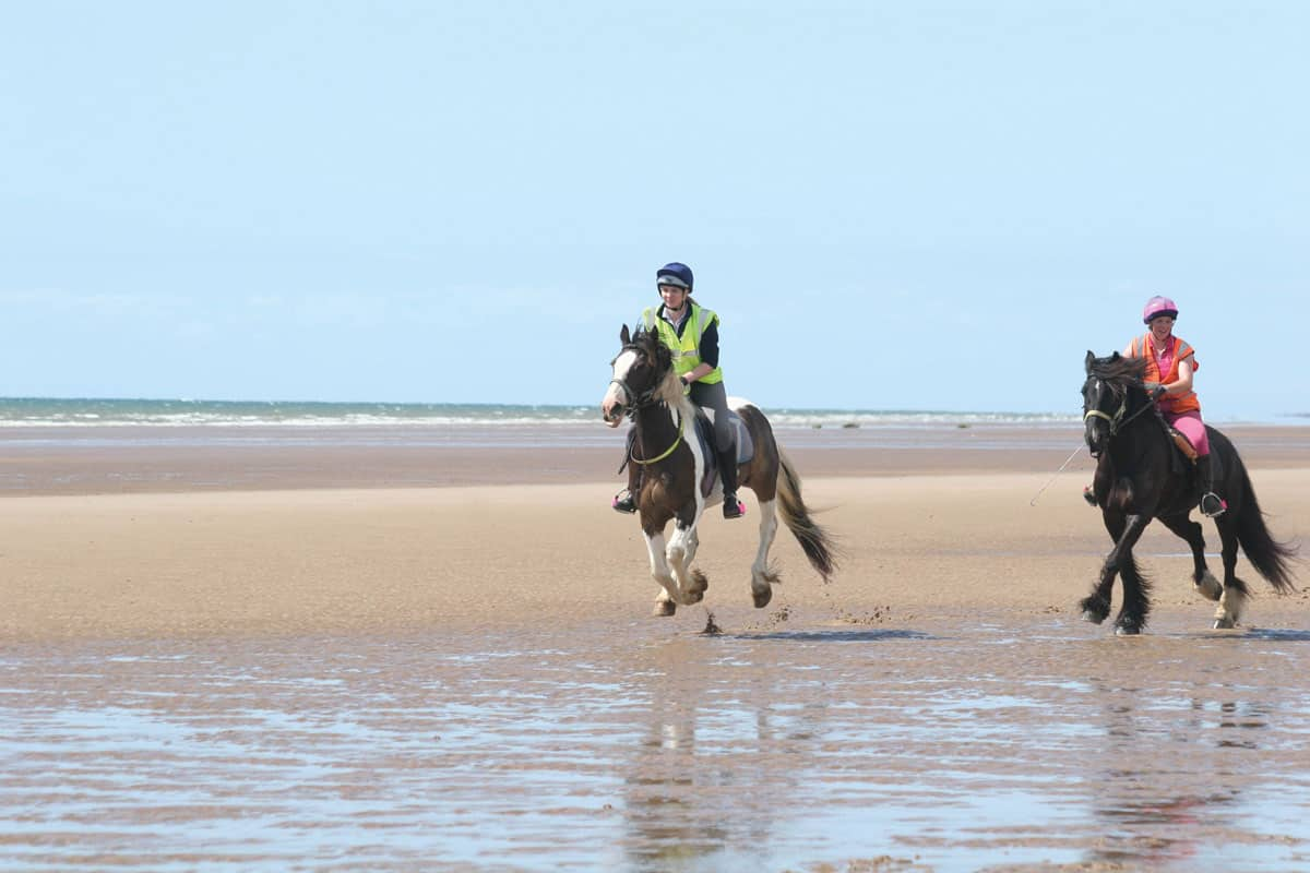 Ponies galloping on beach