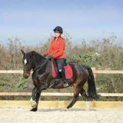 Canter transition