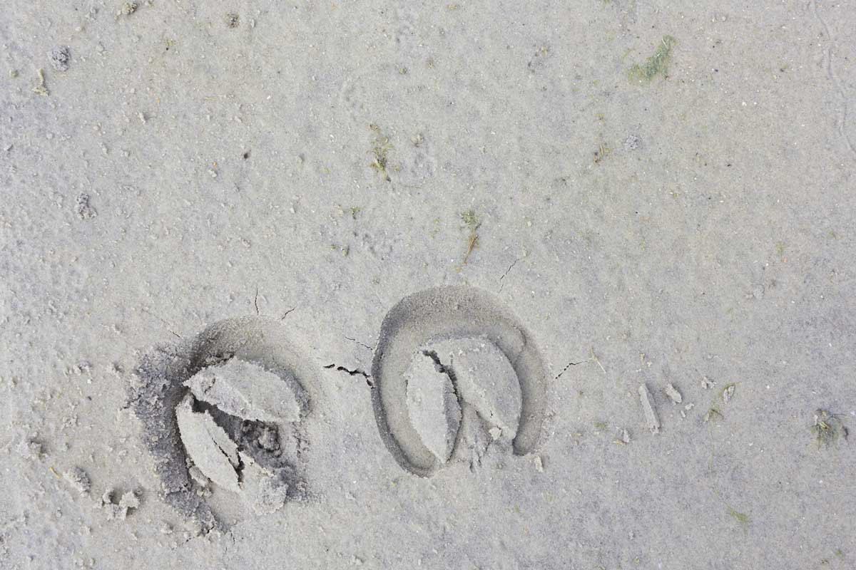 hoofprints on the sand