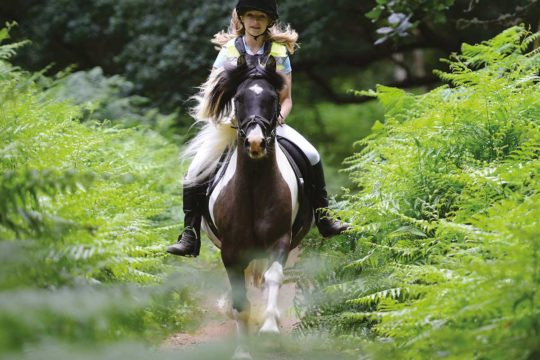 An all-rounder rider