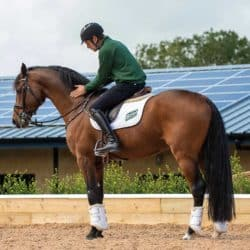 Chris Burton patting a horse