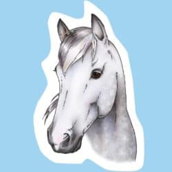 Drawing a horse's head