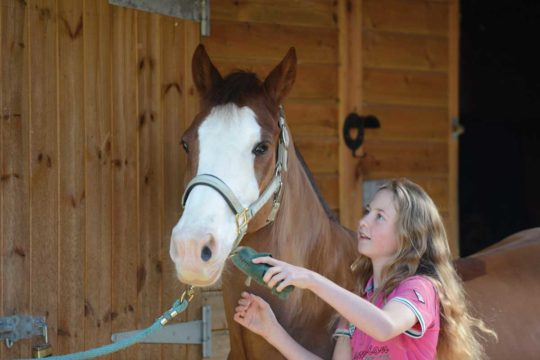 Girl grooming pony