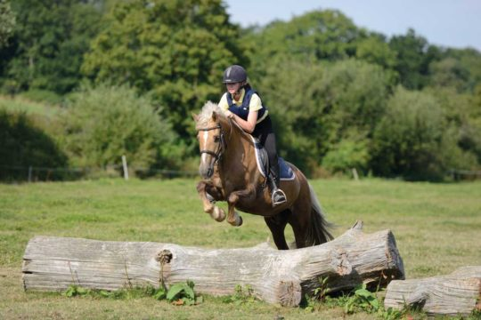 Pony jumping a log in a field