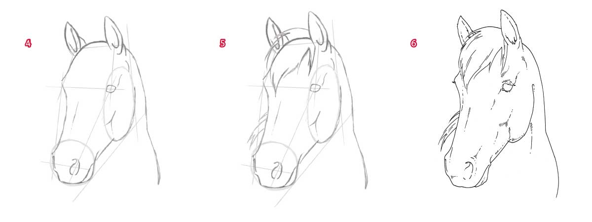 Steps on how to draw a horse's head