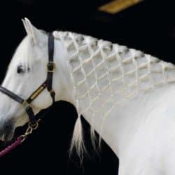 Fun plait in a horse's mane