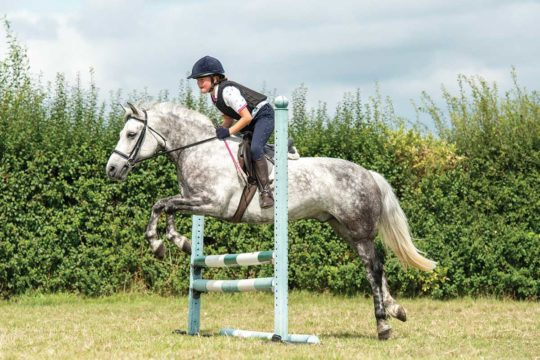 Connemara Pony Jumping