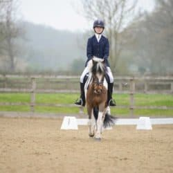 Pony competing in dressage