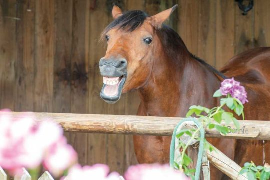 pony making a funny face